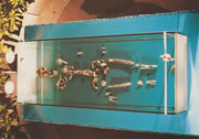 Ricostruzione scheletro San Tommaso